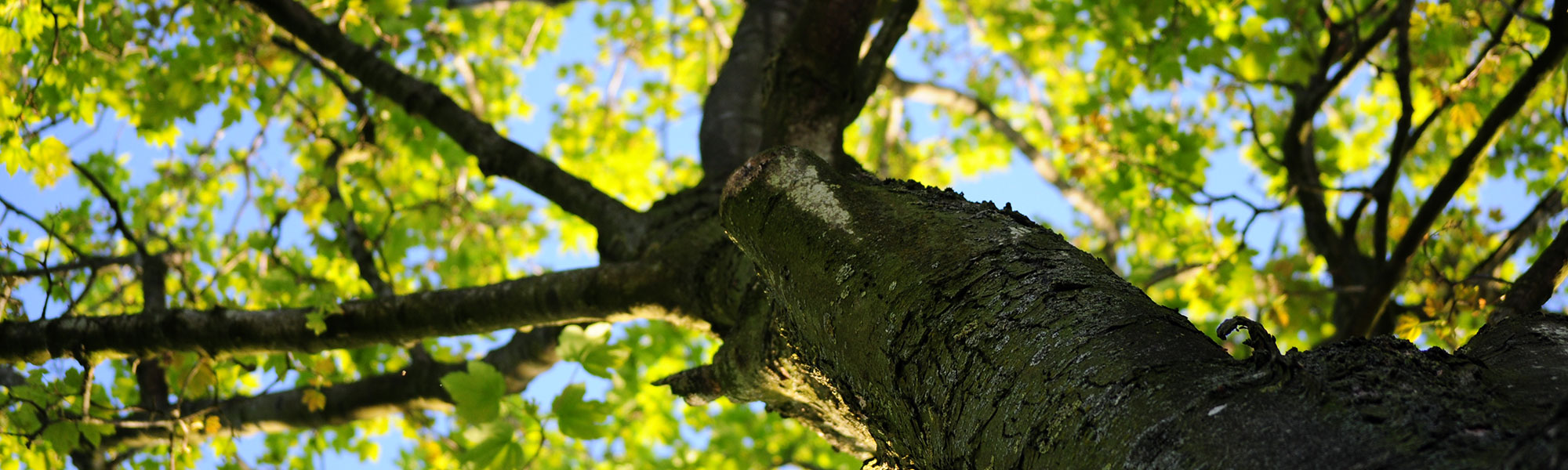 tree identification course online free